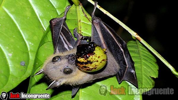 morcegos vírus ebola