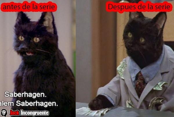 sabrina gato Salem Saberhagen 2015
