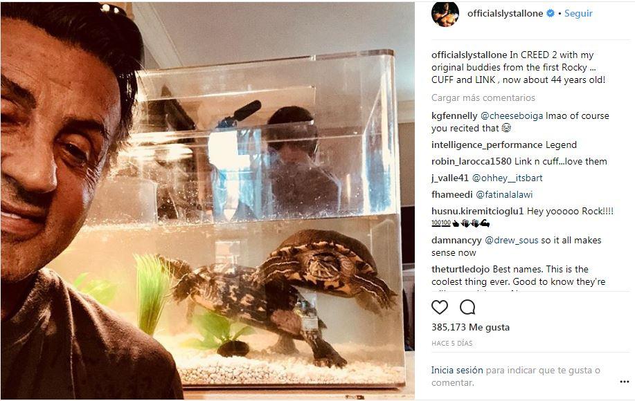 Curiosidades de Rocky Las tortugas aun estan vivas y actuarán en 'Creed 2' 42 años después.