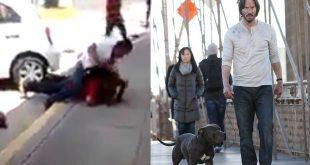 Un hombre golpea a otro por haber pateado a un perro y en redes le apodan Juan Wick 2