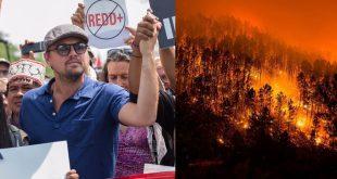 Leonardo DiCaprio y otros famosos piden apoyo para salvar la selva del amazonas
