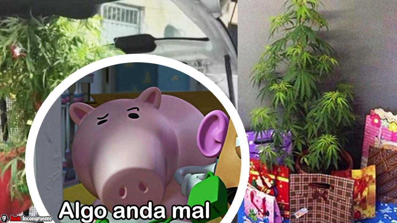 Lo arrestan por decorar planta de marihuana como árbol de Navidad1